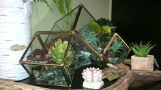 Gold Metal and Glass Triple Connected Slanted Cube Cluster Terrarium  Use to make your own terrarium or decor. Endless possibilities, make it unique to you!  Just add some lights, or some plants or go all out and make your own little mini garden or scenery. Perfect for any spot in your home or office, different and unique.   Dimensions: Width: 16 Height: 9.5 Depth: 8.5