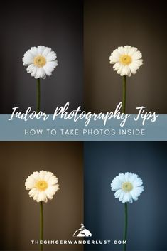 Are you currently trying to take pictures at home but struggling to make your indoor photos look crisp and professional? In this article I will share some indoor photography tips so that you can learn how to take photos inside and avoid harsh shadows, and yellow tinted pictures. Learn what camera settings to use for indoor photography and get shooting inside!