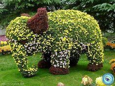Goldige, hübscher Elephantenbaby