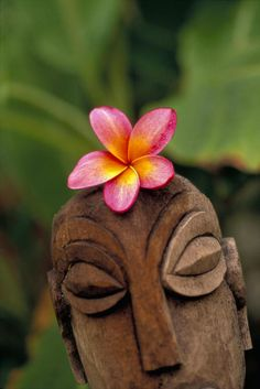 Polynesian statue and Plumeria