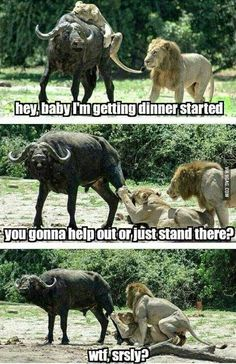 LOL pictures funny of the hour PM, Tuesday May 2015 PDT) – 20 pics Funny Animal Pictures, Best Funny Pictures, Funny Animals, Cute Animals, Weird Pictures, Funny As Hell, Funny Cute, Hilarious, Jokes