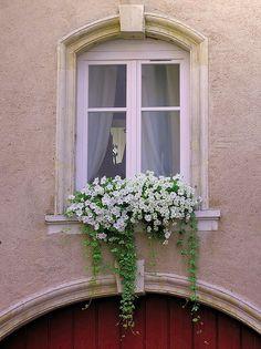 Nancy through my eyes | Flickr - Photo Sharing!     Window Box