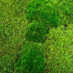 Moss Sampler from Moss & Stone Gardens
