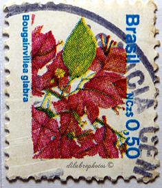 Brazil.  FLORAL TYPE OF 1989.  INDIGENOUS FLORA. BOUGAINVILLEA GLABRA. Scott 2178  A1177,  Issued 1989 June 30,   Perf 11 x 11 1/2, 50cr. /ldb.