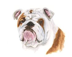 WATERCOLOR BULLDOG PRINT Bulldog Painting by BWandersDesignCo -- Brooke Odom