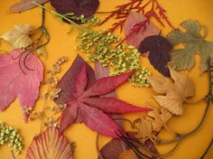 Fall Nature Decor Wedding Table Decor Fall Leaves Autumn Garden Real Nature CONFETTI $25 for 100 pieces