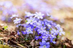 6 rastlín, ktorým to najviac pristane vo februári a v marci | Záhrada.sk