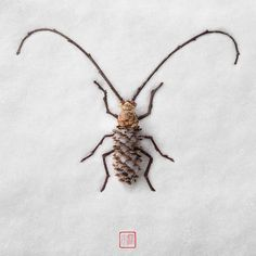 Raku Inoue - A garden alive with art: all-natural insect sculptures – in pictures Twig Crafts, Insect Crafts, Pine Cone Crafts, Insect Art, Nature Crafts, Land Art, Art Et Nature, Twig Art, Art Et Design