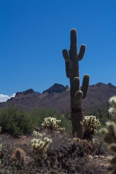 Hiking the Arizona desert
