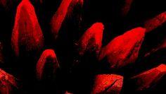 """2015.06.03 - """"Haluan kuolla, jotta kipu loppuu"""" – lue karmeat tarinat siitä, miten kipua hoidetaan Suomessa. Kysyimme lukijoilta kokemuksia kivun hoidosta Suomessa. Kyselyyn vastanneiden potilaiden ja heidän omaistensa mukaan monet joutuvat kokemaan erittäin tuskallisen kuoleman."""