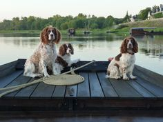 Dogs Welcome at this Bed and Breakfast inn Saumur Loire Valley Vineyards. Bring your four legged friend on holiday with you to the Loire Valley great walks. Great Walks, Four Legged, Bed And Breakfast, Friends, Bobs, France, Animals, Big Houses, Wine