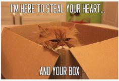 Valentine Kitty has ulterior motives...