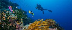 If you or any of your friends are planning a dive trip this year please share this pin.  Why not enjoy paradise on both land and see? Our dive staff would love show you our home waters. Are you ready?