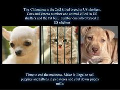 You ~ can help to change this!!!!  Quit making excuses, there is an adoptable pet for everyone!!!