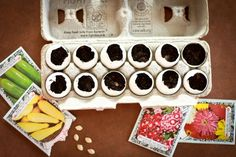Genius Gardening Hacks You'll Regret Not Knowing Start seeds in empty eggshells.Start seeds in empty eggshells. Organic Gardening, Gardening Tips, Preschool Garden, Starting Seeds Indoors, Big Plants, Water Plants, Growing Seeds, Seed Starting, Food Waste