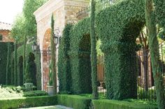 Beautiful green bush archways at the entrace of Villa Siena | villasiena.cc
