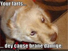 Funny Animal Pictures With Quotes Inspirational 4 On Funny Quotes ...