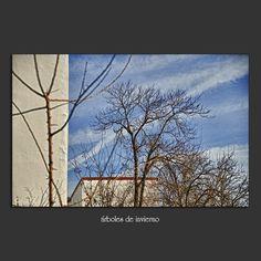 Meridiana claridad: árboles de invierno