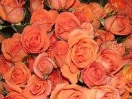 orange roses to make bridesmaids bouquets