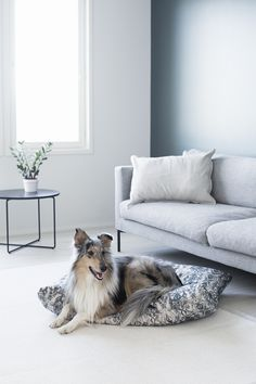 Finnish lifestyle brand KIND is aiming to bring Nordic-style wares to the dogs, using sustainable materials that combine comfort and functionality. Nordic Design, Nordic Style, Dog Milk, Dog Accessories, Cute Photos, Dog Design, Dog Bed, Collie, Dog Days