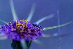 Luis Mariano, Facebook, Twitter, Instagram Posts, Nature, Flowers, Colors, Blog, Naturaleza