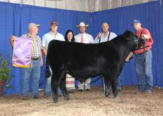 APS Heritage won grand champion bull at the 2014 Tennessee State Fair Roll of Victory (ROV) Angus Show, Sept. 7 in Nashville, Tenn. Kody Miller, Mount Olive, Miss., owns the January 2014 son of PVF Insight 0129. He earlier won junior calf champion. Kevin Rooker, Uniontown, Pa., evaluated the 130 entries. Photo by Alex Tolbert, American Angus Association.