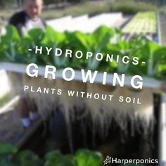 """#Hydroponics is my favorite way to grow vegetables. While it's not 100% """"organic"""" I think it has many benefits to regular gardening/farming.  1. It uses less water 2. You don't have to worry about weeds 3. You have access to the roots which helps when diagnosing plant issues and treating plants 4. You can transplant plants by just picking them up 5. You can fine tune and control the nutrients the plants have access to 6. Plants often grow faster in hydroponics  and there are so many more…"""
