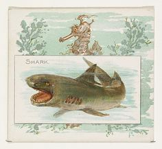 Shark, from Fish from American Waters series (N39) for Allen & Ginter Cigarettes