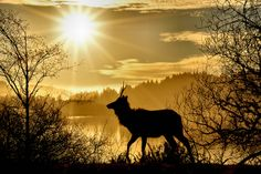 JayandMelPhotography: Elk, Big Lagoon, Sunshine, Nature, Beautiful.