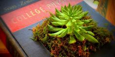 Artist's 'Library Laboratory' Gives Old Books New Life As Planters