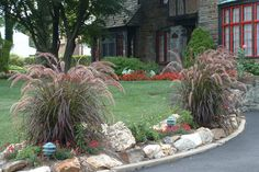 All-Time Favorite If you could only choose one ornamental grass, fountain grass (Pennisetum) should be at the top of your list. With its graceful, arching stems and long, flowing plumes, fountain grasses are 4-foot-tall mounds of pure curb appeal. There are many varieties; check your local nursery for what's best in your area.