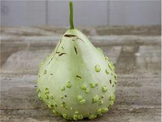 gourd, mayo bule   Baker Creek Heirloom Seed Co