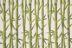 All Outdoor Fabric :: Tempo Bamboo Printed Poly Outdoor Fabric in Cream $8.95 per yard - FabricGuru.com: Discount and Wholesale Fabric, Upholstery Fabric, Drapery Fabric, Fabric Remnants