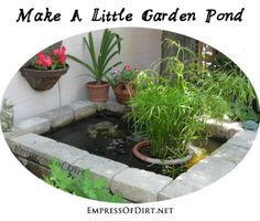 Easy Trick For A Sparkling Clear Pond - Empress of Dirt