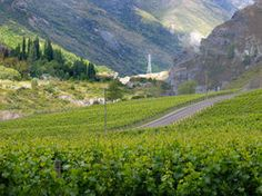 """New Zealand's Central Otago wine region, as is common with many """"newer"""" wine regions in their early stages of development, is actually several distinct regions in one. The first view of the region, and the first of the smaller distinct areas that most travelers encounter is the stunning landscape of the Gibbston Valley.    The thing about Gibbston valley, though, is"""