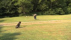 Training Video for Waterfowl Dogs