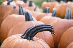 Pumpkins, Autumn, Fall, Halloween, Thanksgiving, Orange, Autumn Photography, Autumn Wall Decor, Autumn Photography, Pumpkin Photography - pinned by pin4etsy.com