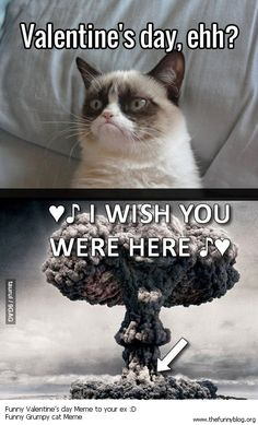 74 Best Grumpy Cat Love Valentines Images On Pinterest Grumpy