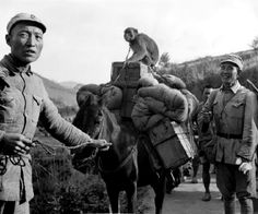 Chinese Nationalist soldiers of the Chinese Expeditionary Force, under command of General Wei Lihuang, move forward towards the Salween river on the frontlines in southwester China. There, Chinese troops launched a general offensive in western Yunnan, to help break the blockade of the Japanese on the Burma Road. The soldiers bring their pet monkey, with transport weapons, on the backs of mules. Linxiang District, Yunnan Province, Republic of China. 10 July 1944.
