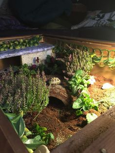 I have seen numerous suggestions for Russian tortoise diet Some great Some awful. Russian Tortoises are nibblers and appreciate broad leaf plants. Tortoise Terrarium, Turtle Terrarium, Tortoise Cage, Tortoise House, Tortoise Habitat, Tortoise Turtle, Turtle Pond, Pet Turtle, Outdoor Tortoise Enclosure