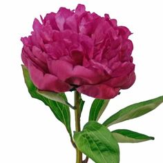 FiftyFlowers.com - Peony Flower Hot Pink July Delivery