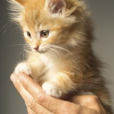 Socializar um gato filhote