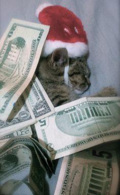 cashcats.biz