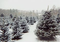 Christmas Trees: Sustainable Choices