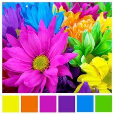 flower color swatch by Lisa Gorski, via Flickr