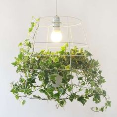 This Vine Photosynthesis Lamp is a Natural Way to Light Your Home trendhunter.com