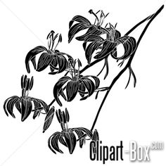 CLIPART FLOWERS BRANCH