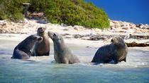 Tour di Penguin Island con crociera per vedere i delfini e i leoni marini, Perth, Dolphin & Whale...