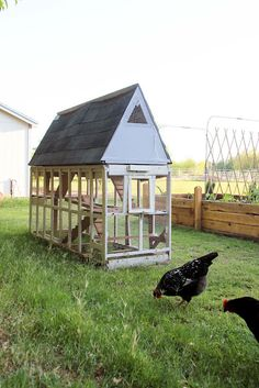 Chickens and a coop Chicken Coup, Chicken Runs, Chickens And Roosters, Pet Chickens, Rabbits, Keeping Chickens, Raising Chickens, Backyard Farming, Chickens Backyard