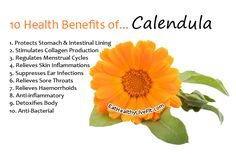 10 Health Benefits of Calendula | Eating Healthy Living Fit - EatHealthyLiveFit.com